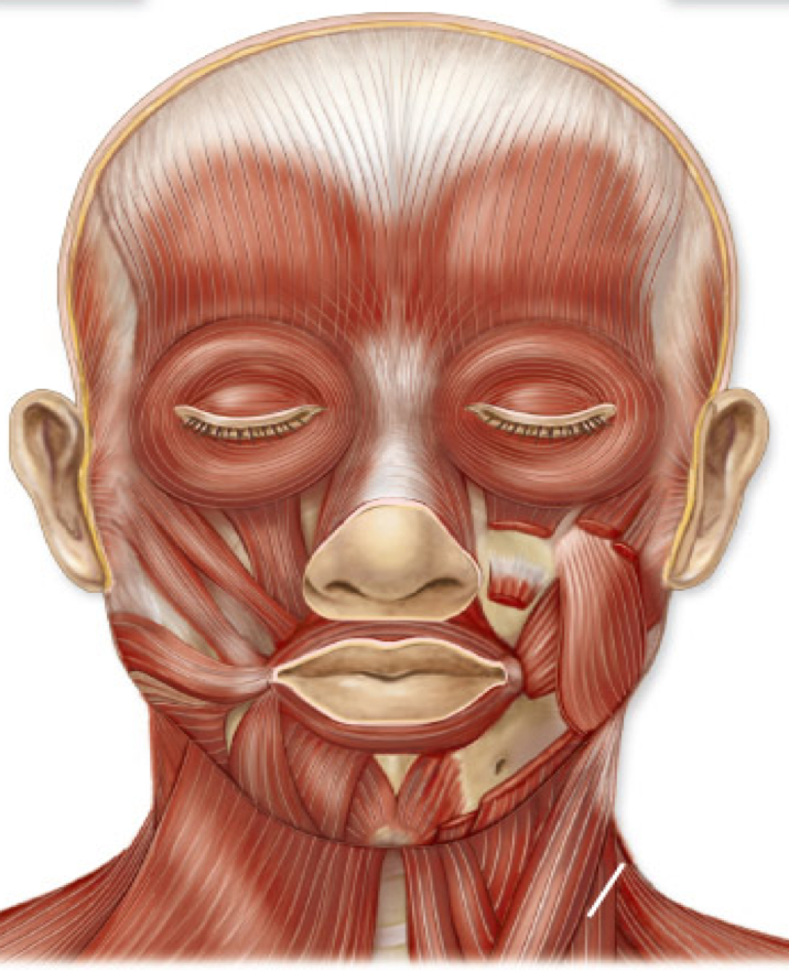 Facial Acupuncture CEU Classes and Cosmetic Acupuncture
